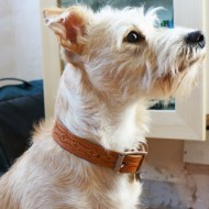 Terrier And Small Dog Collar Hand Tooled In Natural Leather to fit up to 14 inch neck
