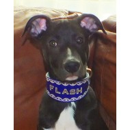 Whippet or Small Lurcher Collar in Blue Leather with Hand Tooled Name